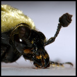 Bug Hebbie Jeebies