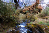 Stream with Epiphytes