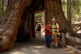 Jim & Glynda at the California Tunnel Tree