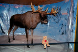 A moose is not like a bird...I can see it