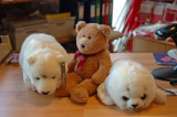 With a seal and a polar bear...