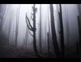 Mystery Forest  §Ñ¼~´ËªL