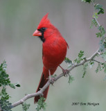 Cardinals,Tanagers,Honeycreepers,Euphonia