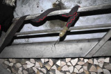 Die Schlange beobachtet die Gäste