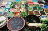 GREEN  FRESH  VEGETABLES