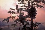 - SUNRISE_BEYOND THE TREE