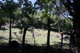 Fincas Ganaderas Cercanas a la Poblacion