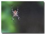 Spider_6157.jpg