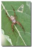 Spider_6322.jpg