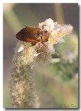 Beetle_7345.jpg