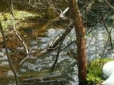 Une tourbière des Vosges