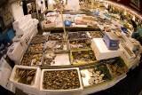 Assorted Sealife