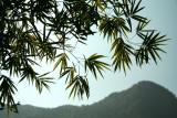 Nature - plantes - fleurs...