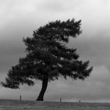 The Britannic Tree.