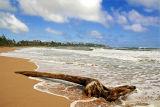 Driftwood - Kauai