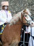 Haflinger horse and Character