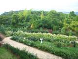 Cartagena Gardens