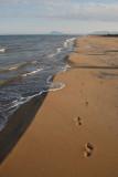 Beach scene at Gandia