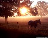 September Sunrise in Caddo Parish, LA
