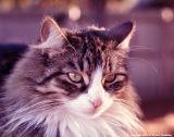 Kitty Midget