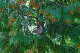 birds_of_our_garden
