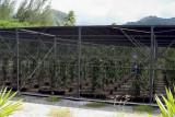 0802 Vanilla Plantation
