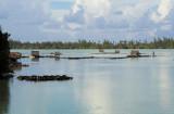 0816 Fish stands at Lake Fauna Nui