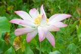 1410 Lotus