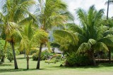 C1458 Gardens of the Royal Tahitien Hotel