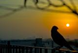 Looking at the rising sun.