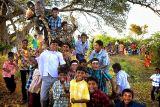 A tree full of boys