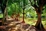 Cotton tree lane