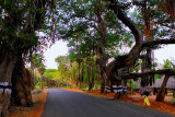 Road to Natham