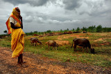 Old woman and her buffalos