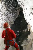 Fern Cave Bat Study