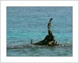 Tropical Impressions: Las Islas Del Rosario