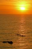 Laguna Beach Kayakers