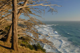 Cliff Trees