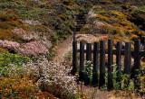 Garrapata Trail