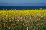 Sea of Wildflowers