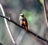 11 Doves to Hummingbirds
