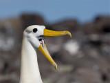 Galapagos Archipelo 2007