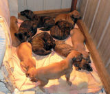 10 of the 11 pups