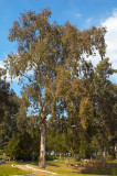 20070309-07.jpg