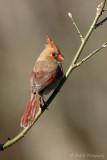 Cardinal pb.jpg