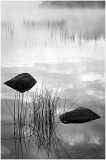 The Natural World in Black & White