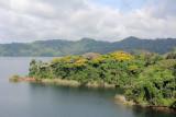 DSC01490 - Colorful treetops on island in Gatun Lake