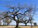 The Saving Tree