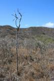 Diamond Head - Dead Tree