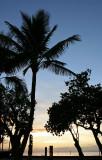 Old Lahaina Luau - Palm Trees